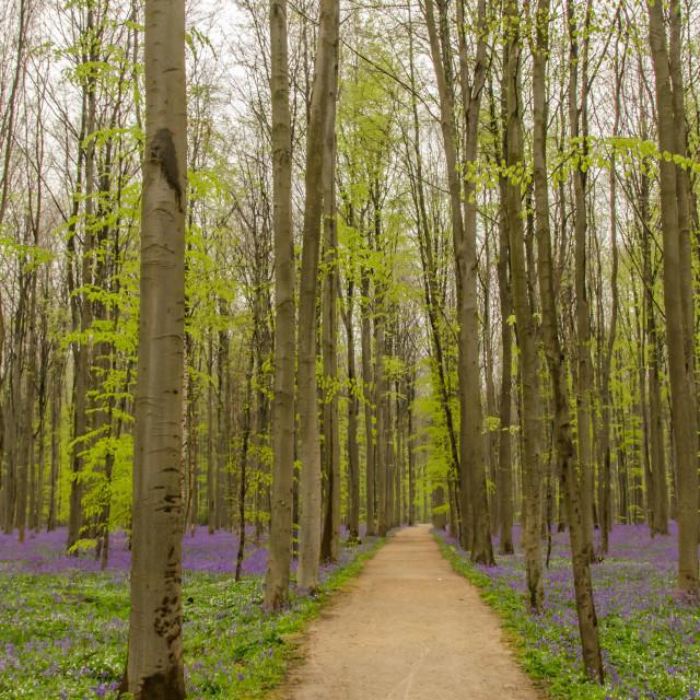 """Purple welcome path"" stock image"