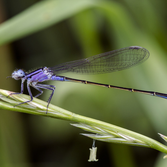 """Dragonfly with bell"" stock image"