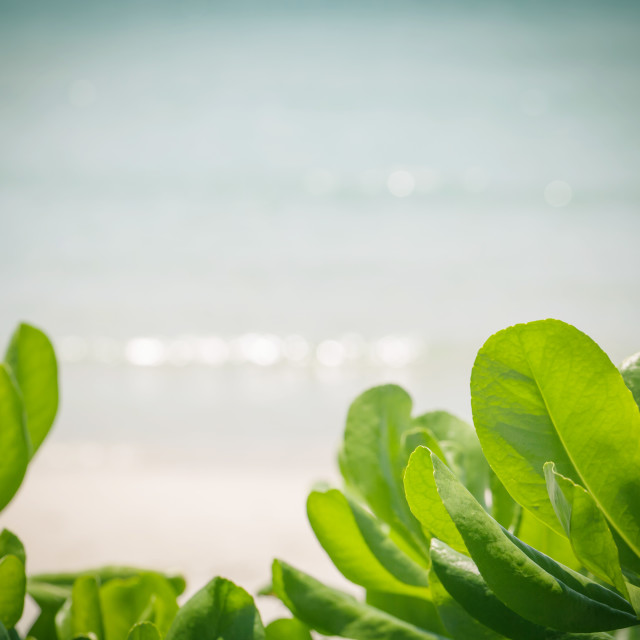 """Blurred of wave bokeh at tropical beach on summer ."" stock image"