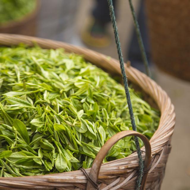 """""""fresh white tea"""" stock image"""
