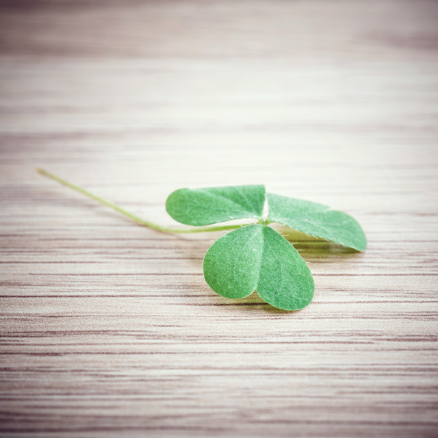 """Closeup clover leaf on wooden background."" stock image"