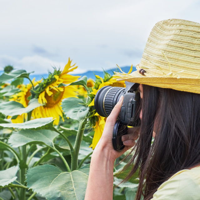 """Among the sunflowers"" stock image"
