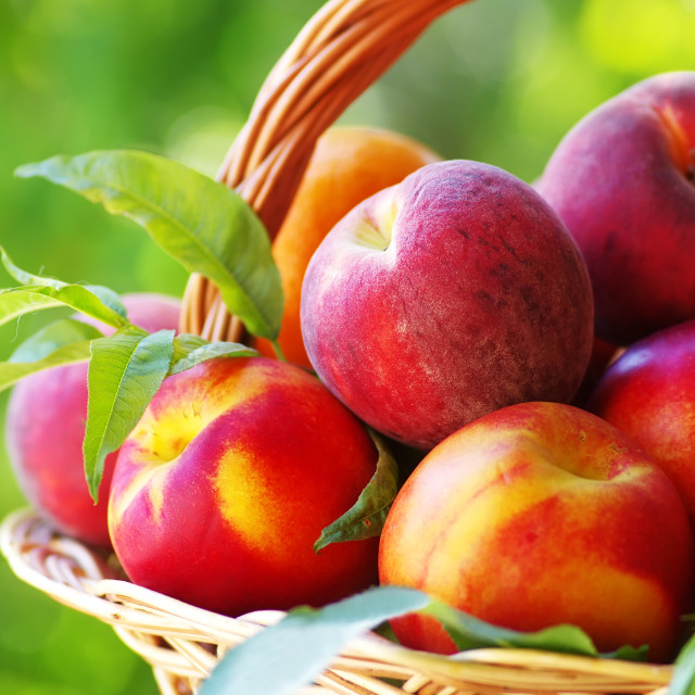 """peaches and nectarines in basket"" stock image"
