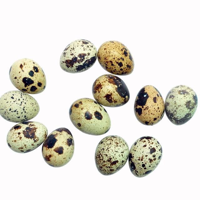 """quail eggs"" stock image"