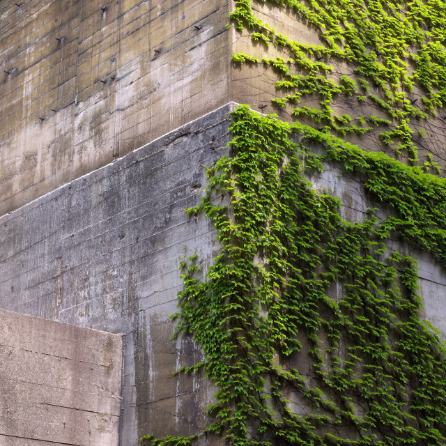 """Wall With Vines"" stock image"