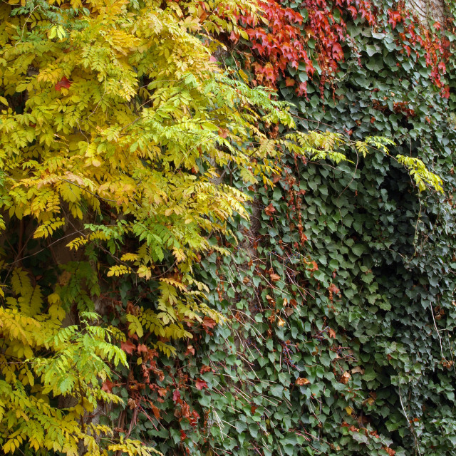 """""""Color Autumns Wall"""" stock image"""