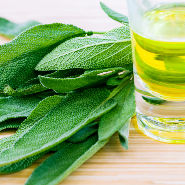 """Fresh sage put on wooden board. - Spices ingredient with macro s"" stock image"