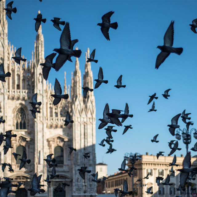 """""""Duomo - Milano"""" stock image"""