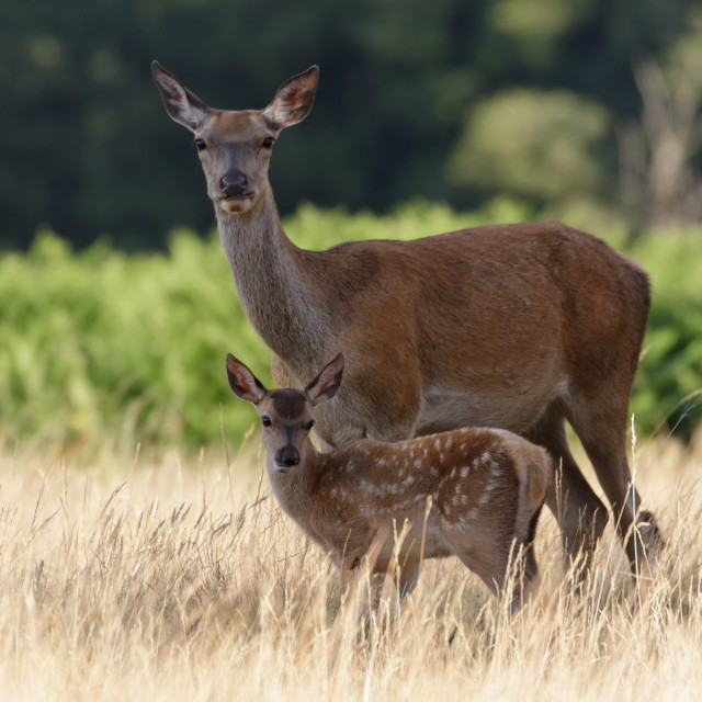 """Mum & Me 2"" stock image"