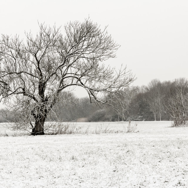 """""""Winter in the field"""" stock image"""