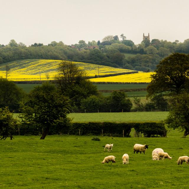 """British Countryside"" stock image"