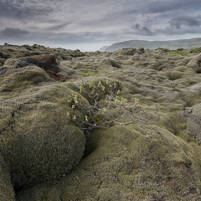 """epic moss dunes"" stock image"