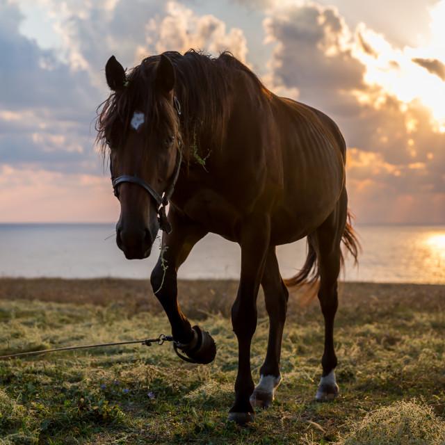 """Horse near the sea"" stock image"