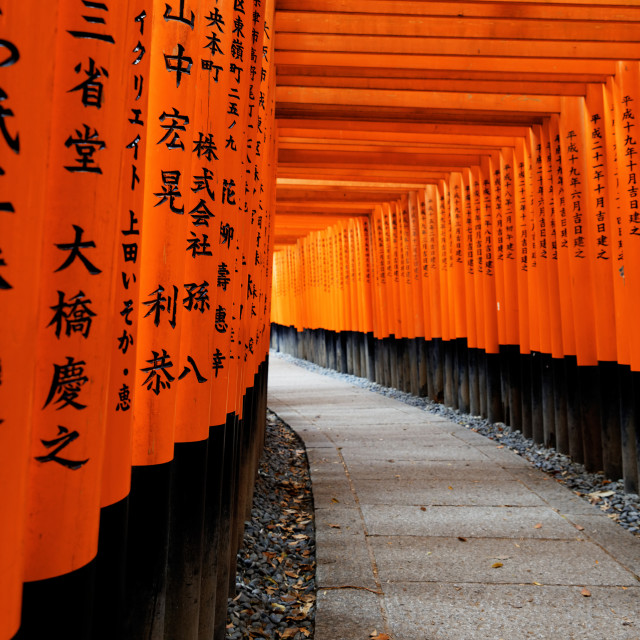 """Fushimi Inari Taisha Shrine"" stock image"
