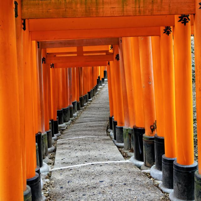 """Fushimi Inari Taisha Shrine in Kyoto"" stock image"
