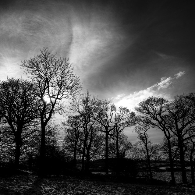 """Black and white rural sunset with trees."" stock image"