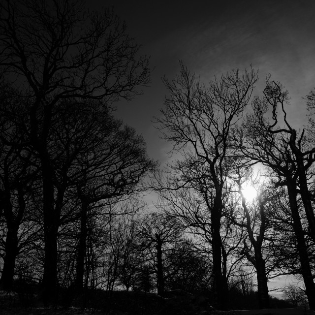 """Black and white sunset behind trees."" stock image"