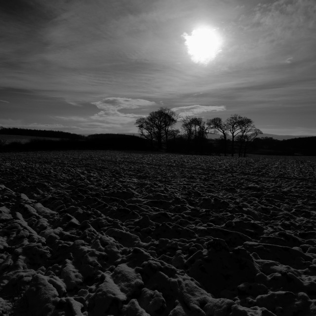 """Black and white rural sunset, trees right."" stock image"
