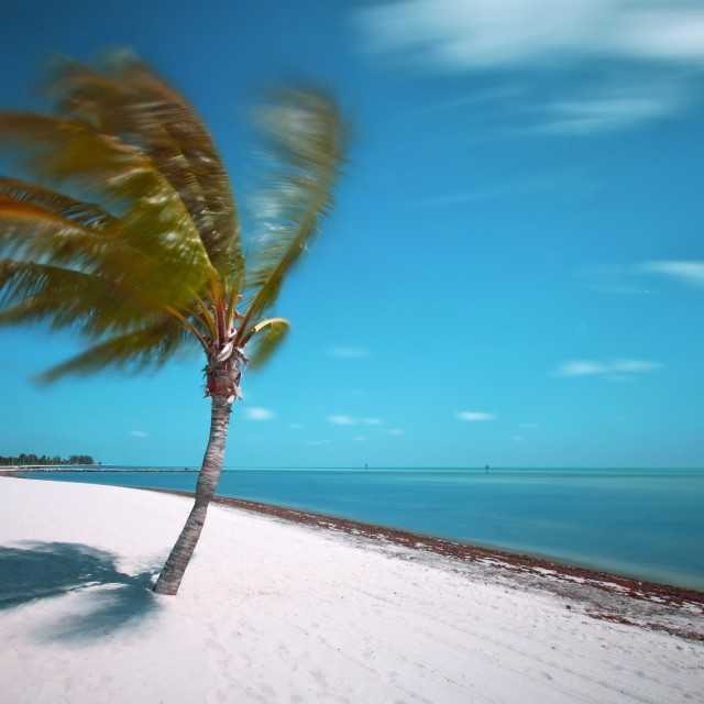 """Time Passes the Key West Palm Tree"" stock image"