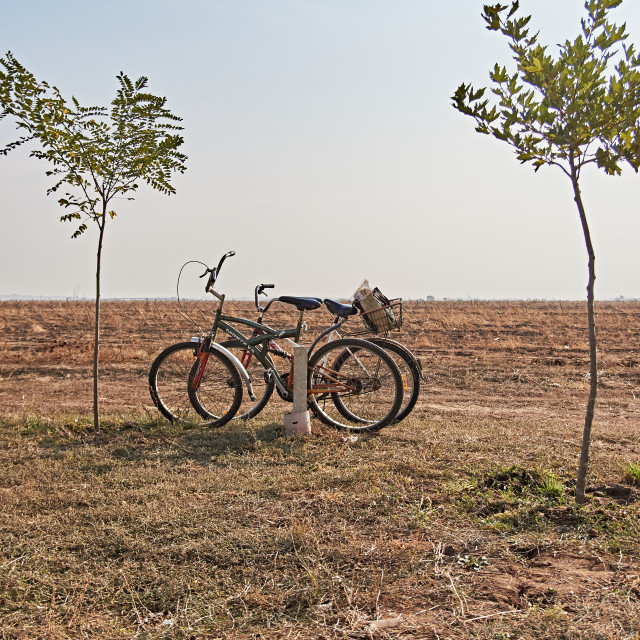 """""""Bicycles between trees"""" stock image"""