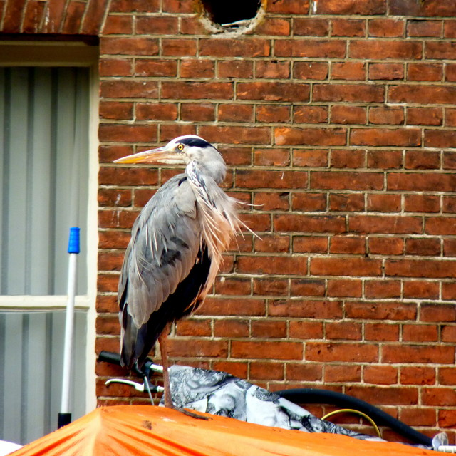 """""""The heron in Amsterdam"""" stock image"""