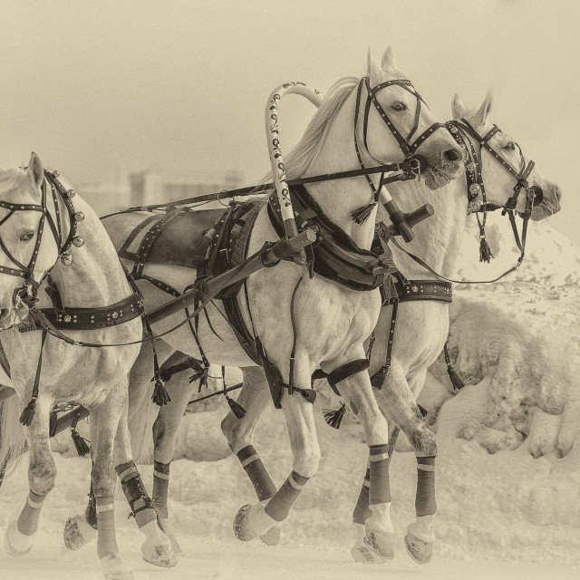 """""""Running horses"""" stock image"""