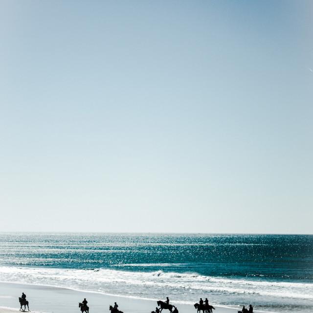 """Where the black horses grow"" stock image"