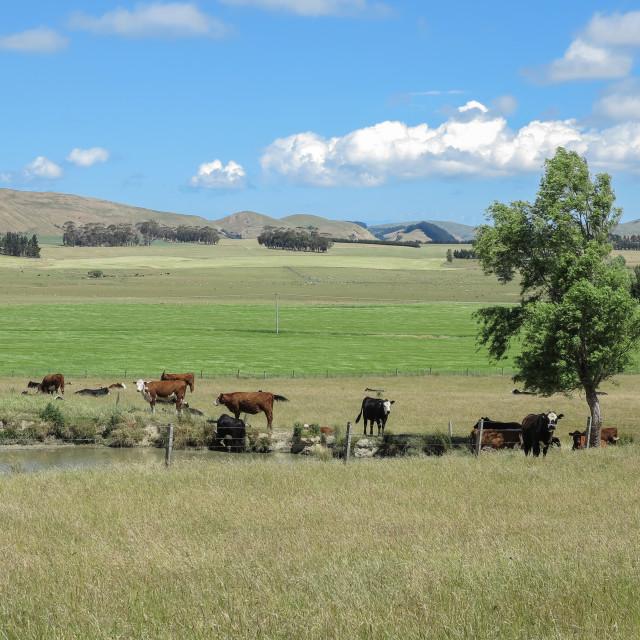 """rural summer"" stock image"