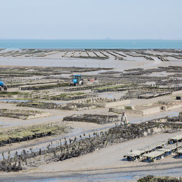 """Oyster farmiing, Cancale, France"" stock image"
