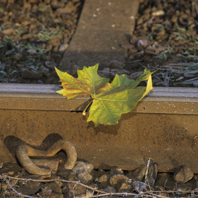 """Single Leaf on a Railway Track"" stock image"
