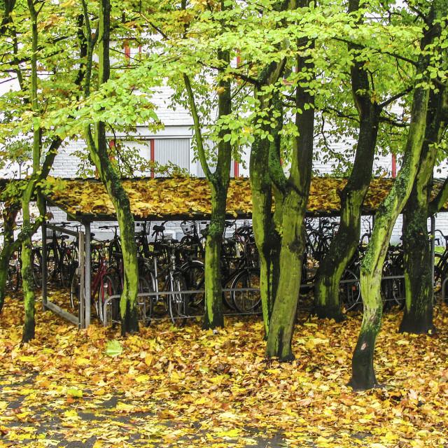 """autumn bike racks"" stock image"