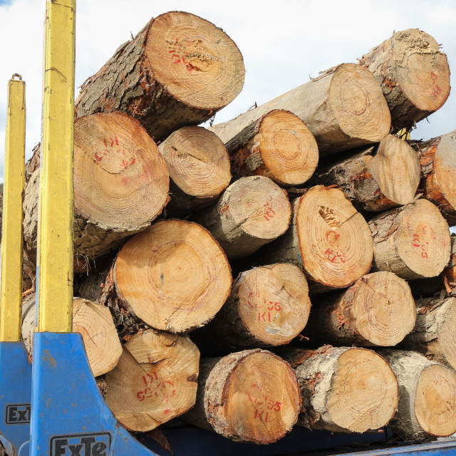 """pine logs"" stock image"