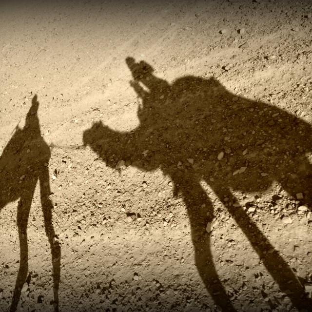 """Desert camels"" stock image"