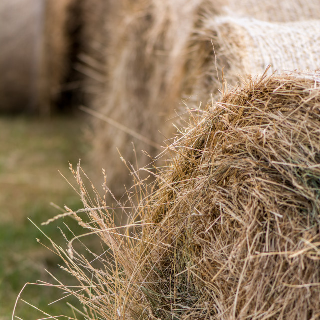 """Hay Bales"" stock image"