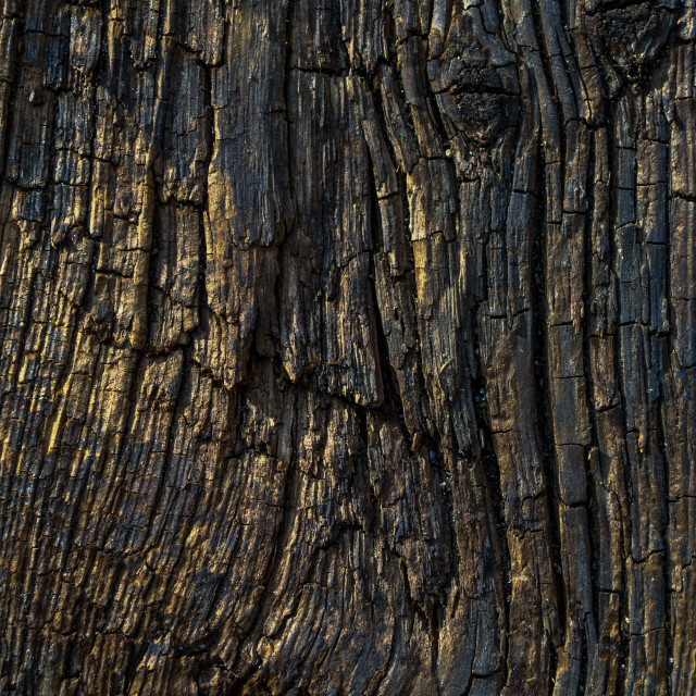 """Old wood"" stock image"