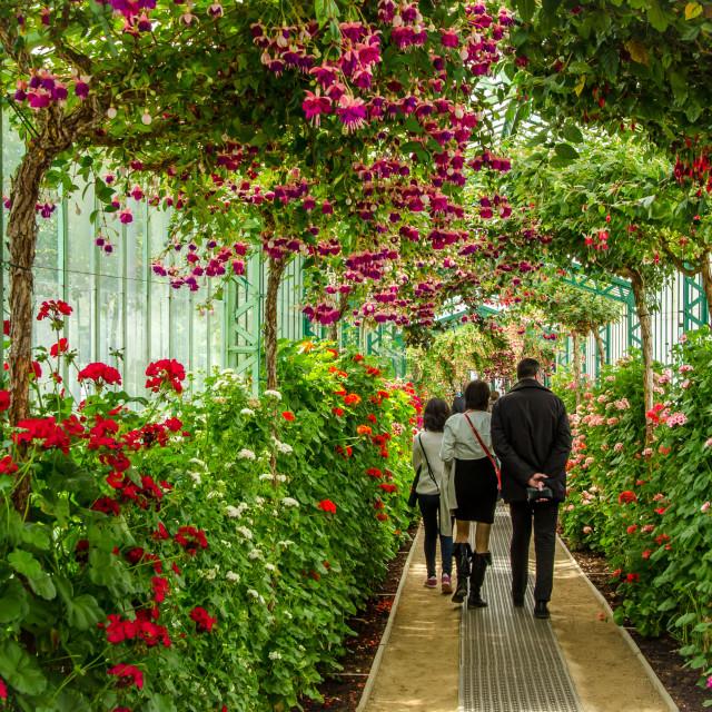 """""""Royal Greenhouses of Laeken 2"""" stock image"""