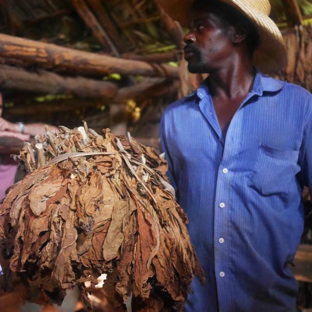 """Cigar farmer"" stock image"