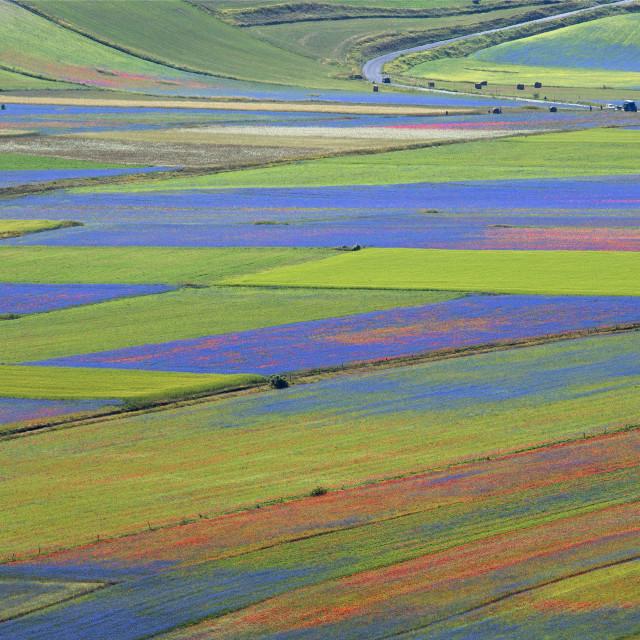 """""""Castelluccio di Norcia, the flower show"""" stock image"""