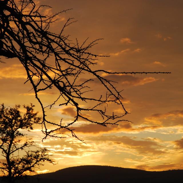 """Thorny Sunset"" stock image"
