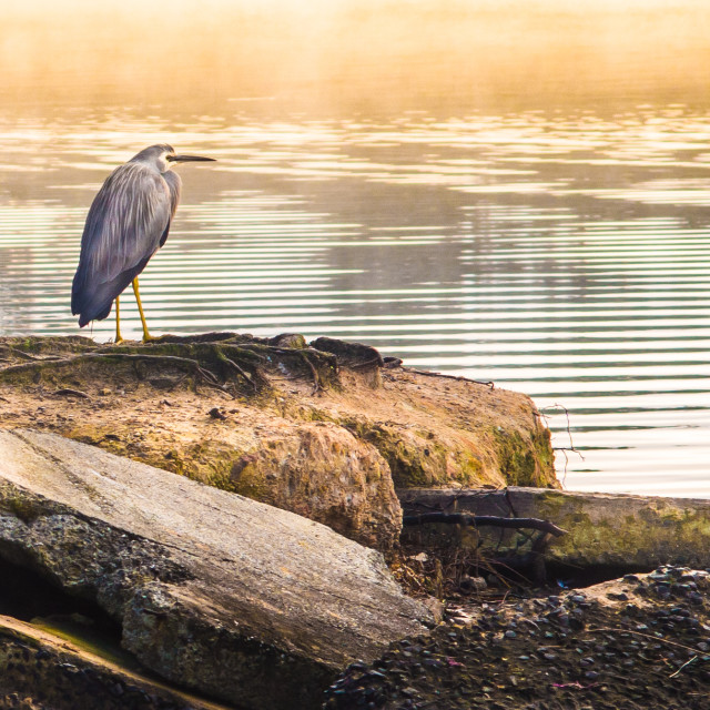 """Bird waiting for Breakfast"" stock image"