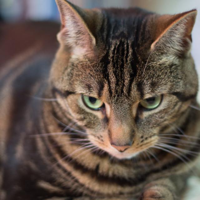 """""""Thinking Cat"""" stock image"""
