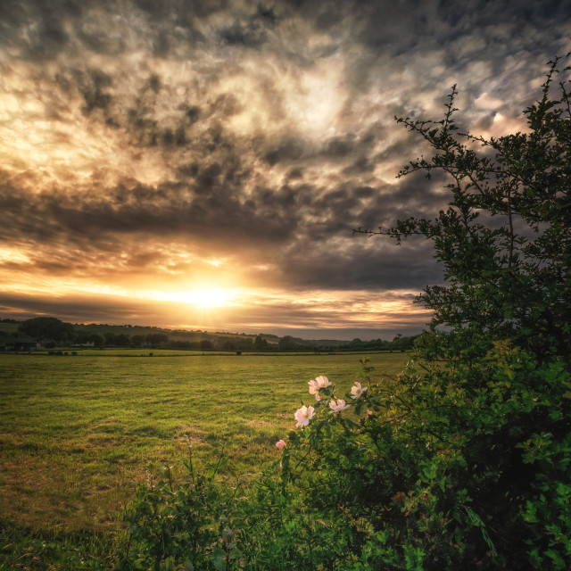 """Hedgerow Sunset"" stock image"