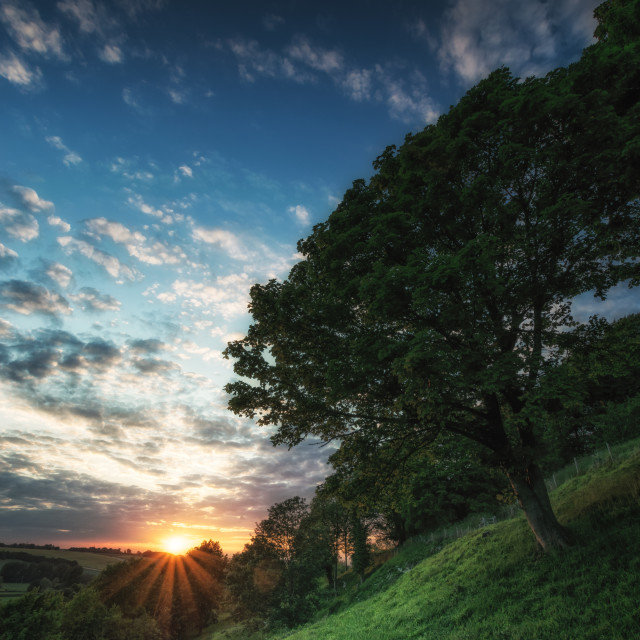 """Tree on a Hillside"" stock image"