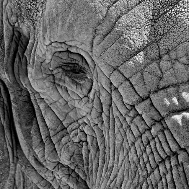 """Elephant"" stock image"
