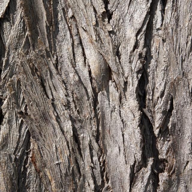"""Tree Crust"" stock image"