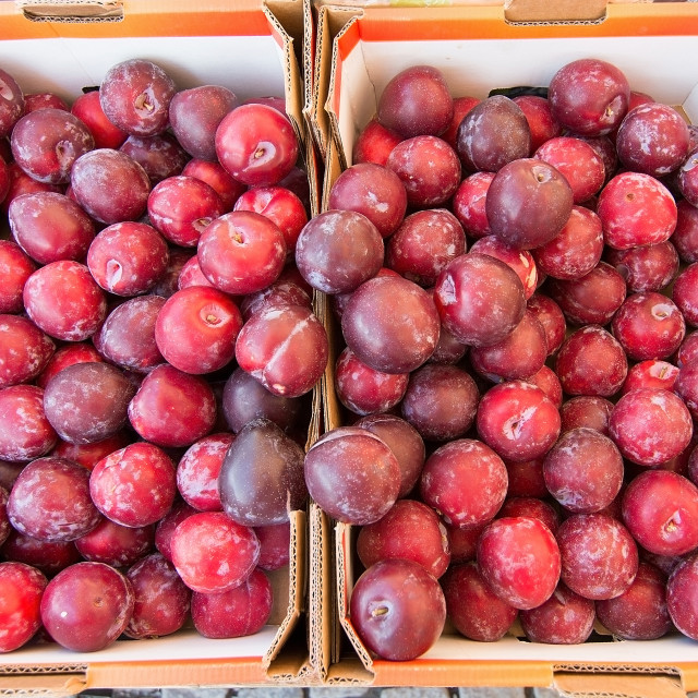 """Red plums"" stock image"