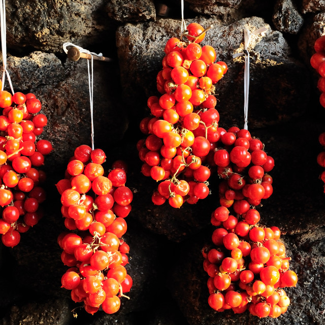 """Tomatos drying in the sun"" stock image"