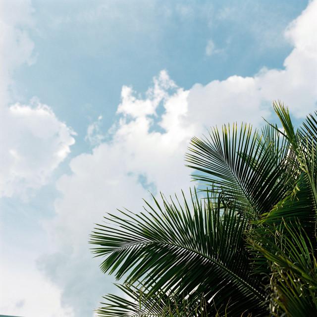 """Summer palms"" stock image"