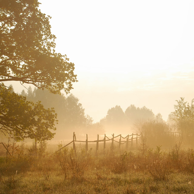 """early morning mist"" stock image"