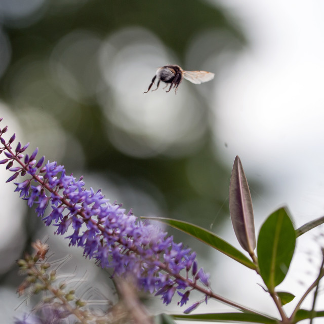 """""""Bee leaving for pastures new"""" stock image"""